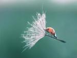 ladybug-landing-with-style1